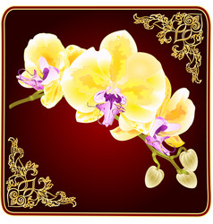 gold orchid branch flowers phalaenopsis vector image