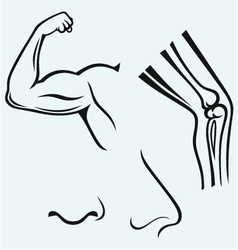 Human body parts vector image vector image