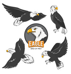 collection cartoon eagles flying birds isolate vector image