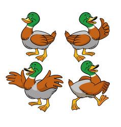 mallard duck with cartoon style vector image