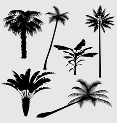 tropical palm tree silhouettes isolated on vector image vector image