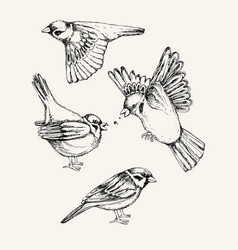 set with different flying and sitting sparrow vector image