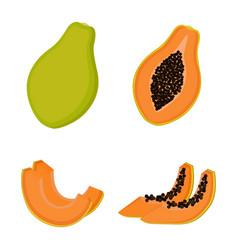 Papaya whole fruit half and slices vector