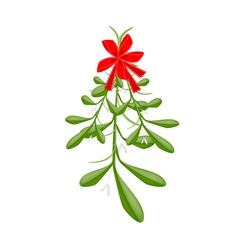 Hanging lovely green mistletoe with a red bow vector