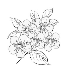 the springtime bouquet vector image vector image