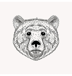 Sketch realistic face Bear Hand drawn in Doodle vector image vector image