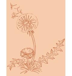 Dandelion outline drawing vector