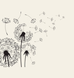Dandelions dandelion with flying seeds vector