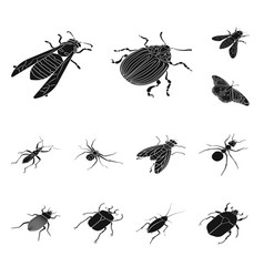 design wings and wing symbol collection vector image