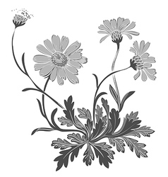 Hand drawn Dandelion flowers isolated on white vector image vector image