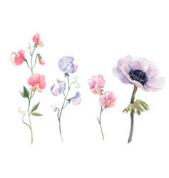 beautiful watercolor floral set vector image