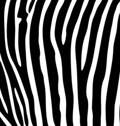Black and white zebra striped background vector image