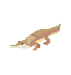 cartoon tropical crocodile isolated on white vector image