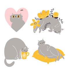 cute british shorthair cat collection 6 vector image