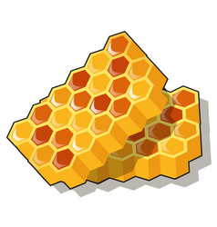 sweet golden honeycomb with honey isolated on vector image
