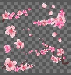 spring sakura cherry blooming flowers pink petals vector image