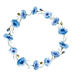 Cornflower watercolor wreath vector image