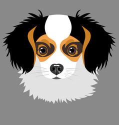 Puppy isolated on grey background vector