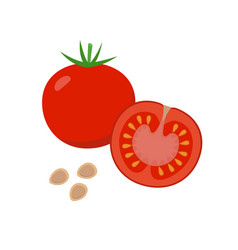tomato flat whole and halved vector image