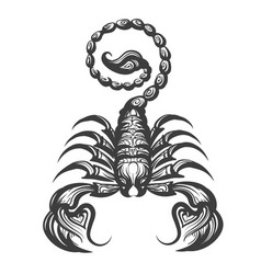 scorpion engraving vector image vector image