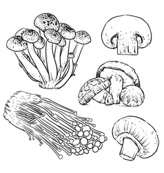 Drawing mushrooms on white background vector image