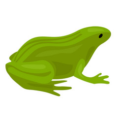 green frog icon cartoon style vector image