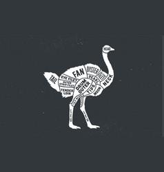 Ostrich butcher guide scheme vector