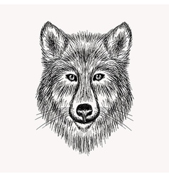 Sketch realistic face wolf hand drawn in doodle vector