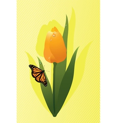 tulip and a butterfly vector image