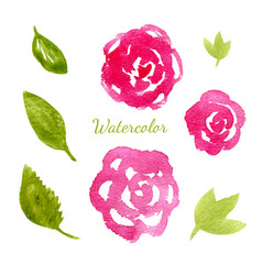 flowers watercolor collection flowers and leaves vector image