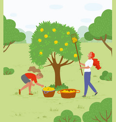 Picking apples in garden trees and bushes outdoors vector