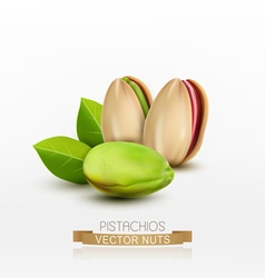 Pistachios peeled or in shell isolated vector