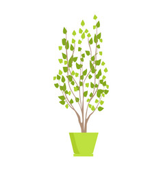 Plant of green color in pot vector