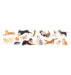 playful dogs flat set vector image