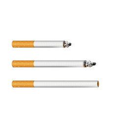 set cigarettes vector image