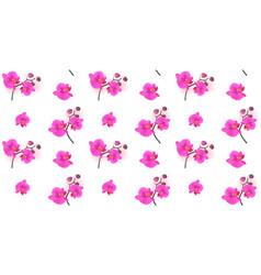 seamless pattern naturalistic beautiful colorful vector image