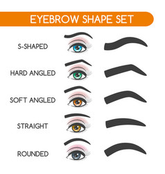 women eyebrows shapes set vector image