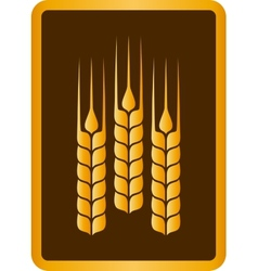 Golden wheat ears vector