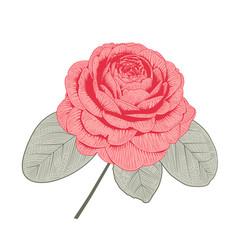 Red camellia rose form flower vector