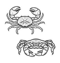 Seafood crab marine crustacean lobster vector