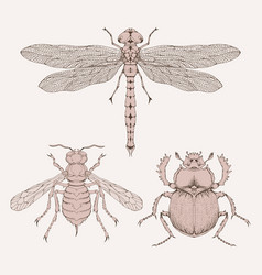 Set hand drawn insects different insects in vector