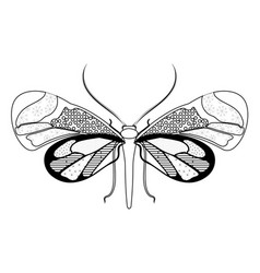 simple zentangle symmetric butterfly vector image