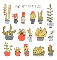 Big colorful set of hand drawn plants vector image