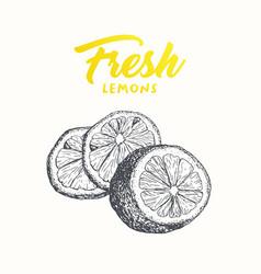 fresh lemons banner design vector image