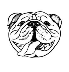 bulldog face vector image vector image