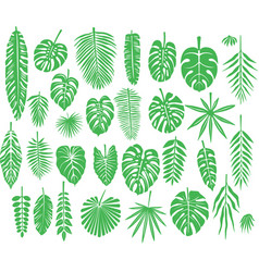 set silhouettes tropical leaves vector image
