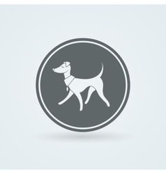 Symbol of Pretty Walking Italian Greyhound vector