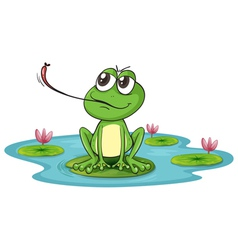 a frog vector image vector image
