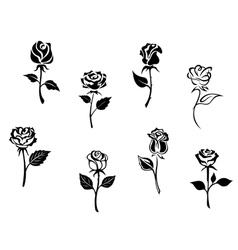 Rose flowers set vector