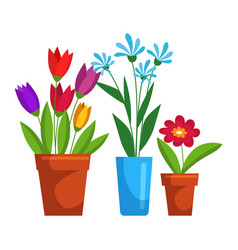 blooming flower in pot set isolated on white space vector image
